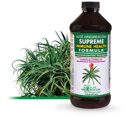 Benefits of Aloe Arborescens