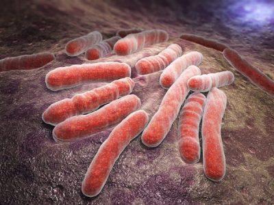 TB bacteria cells