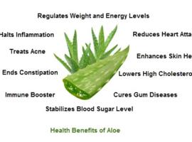 aloe health benefits - Aloe Vera & Aloe Arborescens